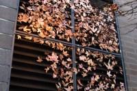 "Leaves photo for ""Away"" poem by New-Brunswick-based copywriter, Winluck Wong"