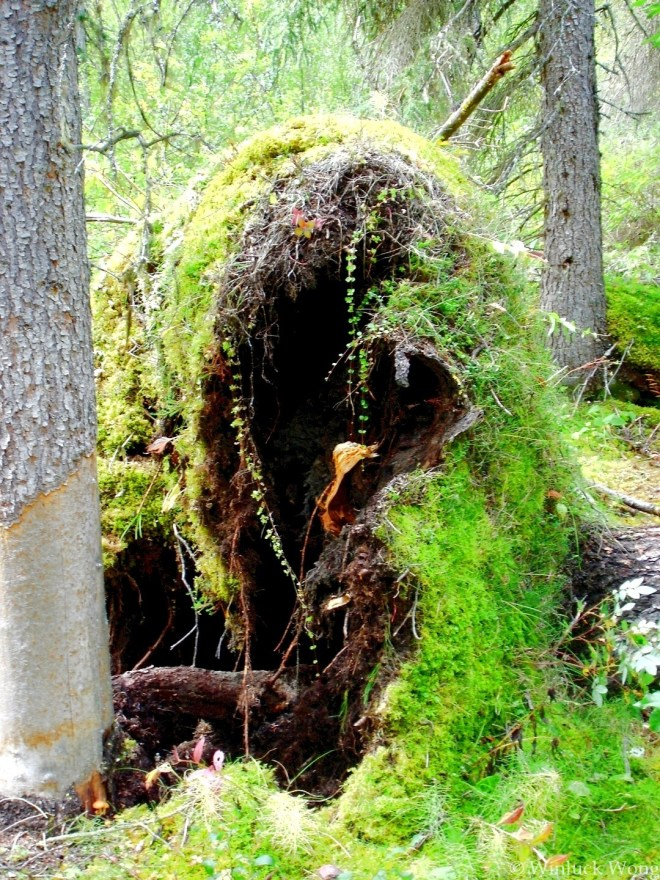 """Dying tree photo for """"Haunted Woods"""" poem by Winluck Wong, poet in New Brunswick"""